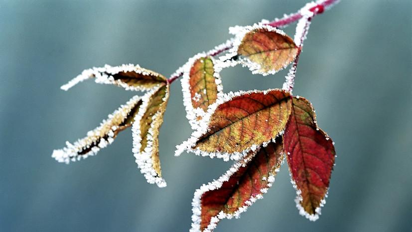 Жителей Волгоградской области предупредили о заморозках