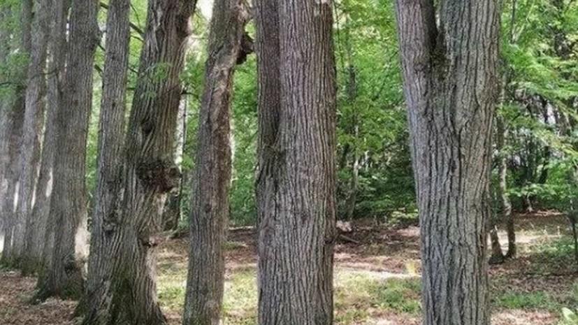 В Татарстане признали объектом культурного наследия парк усадьбы Нарышкиных — Паулуччи