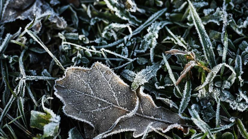 В Свердловской области в ближайшие дни ожидаются заморозки до -5 °С