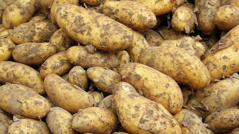 Украина стала крупнейшим экспортёром картофеля в Белоруссию