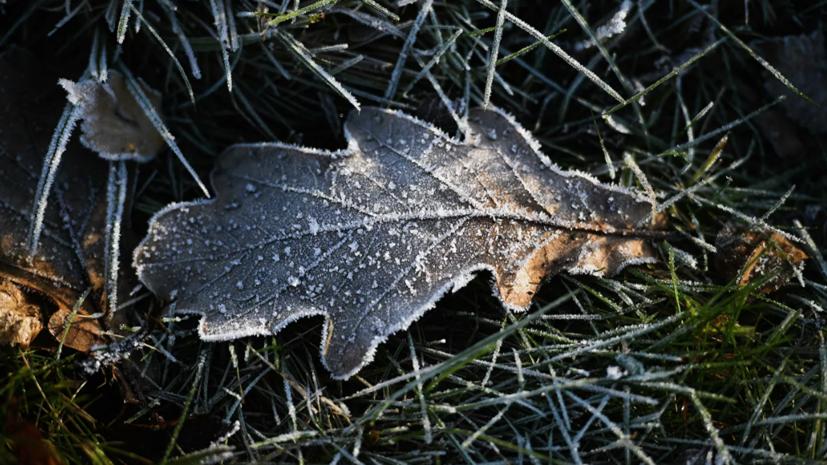Спасатели предупредили о заморозках в Ленобласти