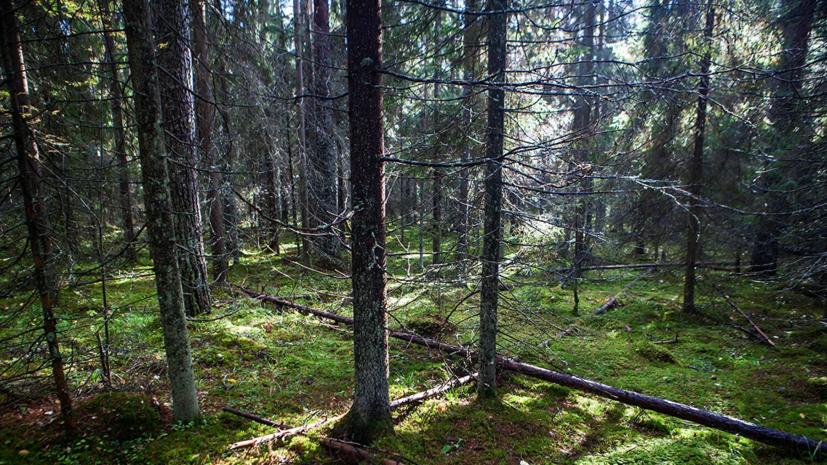 В Татарстане пройдёт экологическая акция «Сохраним лес»