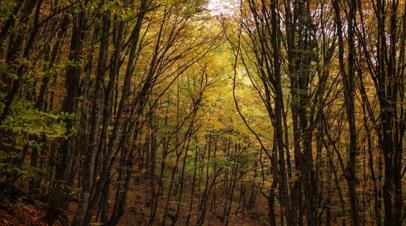 В рамках акции Сохраним лес в Оренбургской области высадят 1,5 млн сеянцев
