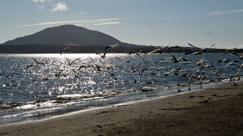 Мэр Курильска прокомментировал слова премьера Японии о Курильских островах