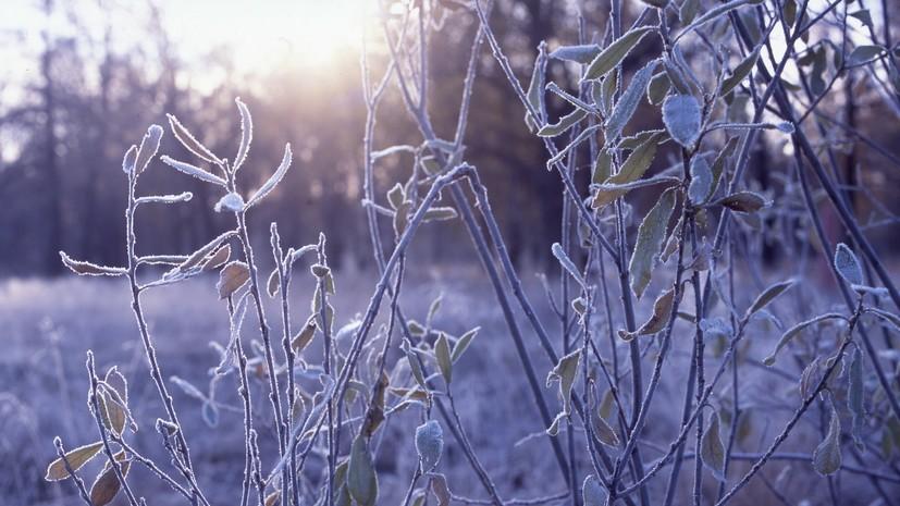 В Гидрометцентре прогнозируют похолодание в Черноземье с 15 октября