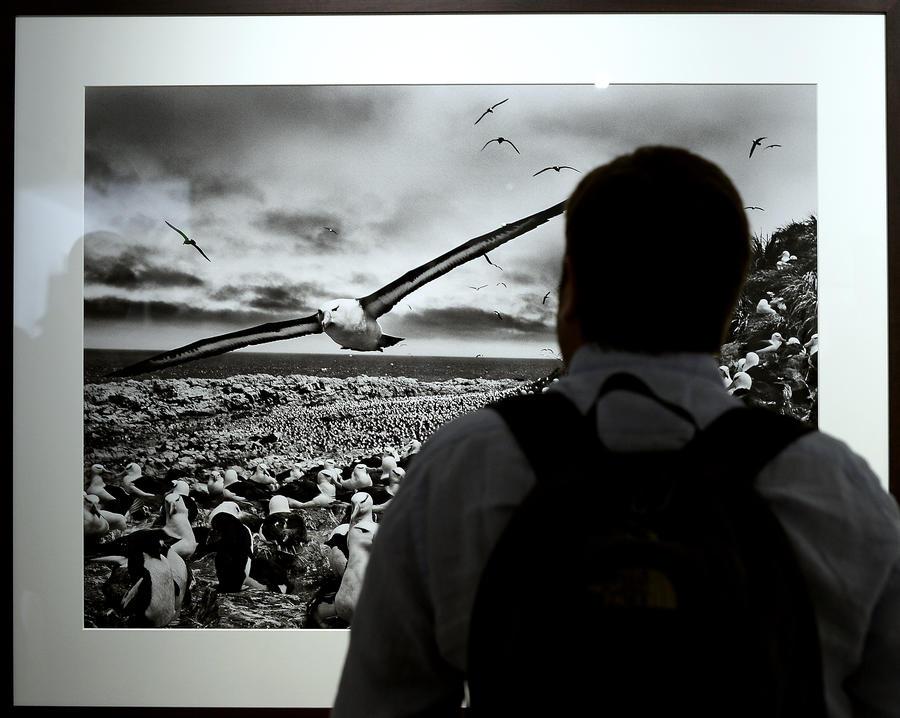 В Англии выставку живой природы спонсировала компания, уничтожающая тропические леса