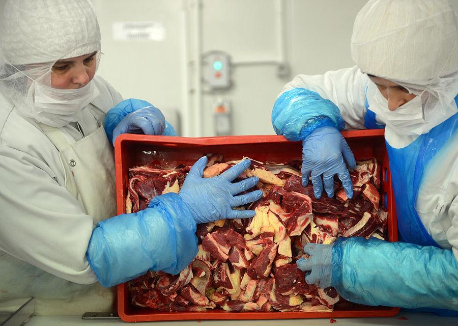 В британские гамбургеры шло мясо старых скаковых кляч