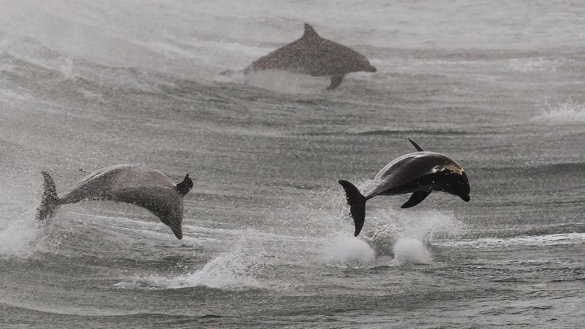 Ученые: дельфины обращаются друг к другу по имени