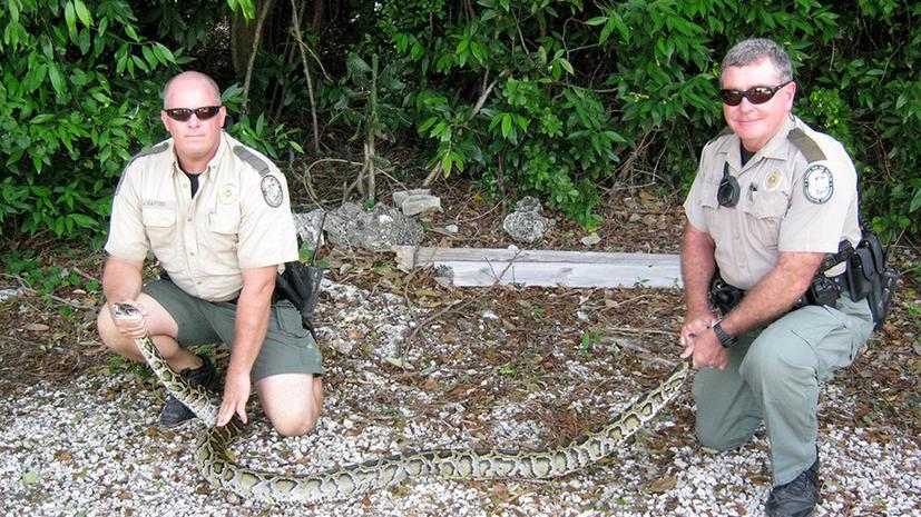 Во Флориде началась охота на змей