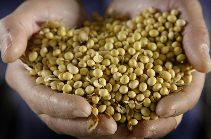 Правительство выступило против введения запрета на ГМО