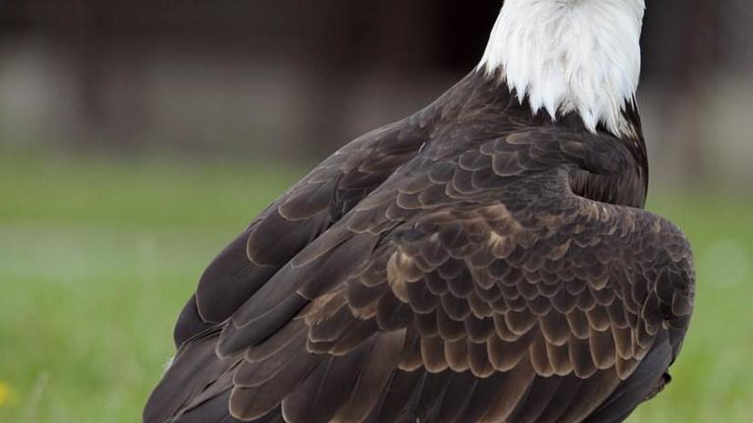Житель США спас птицу и теперь может попасть в тюрьму