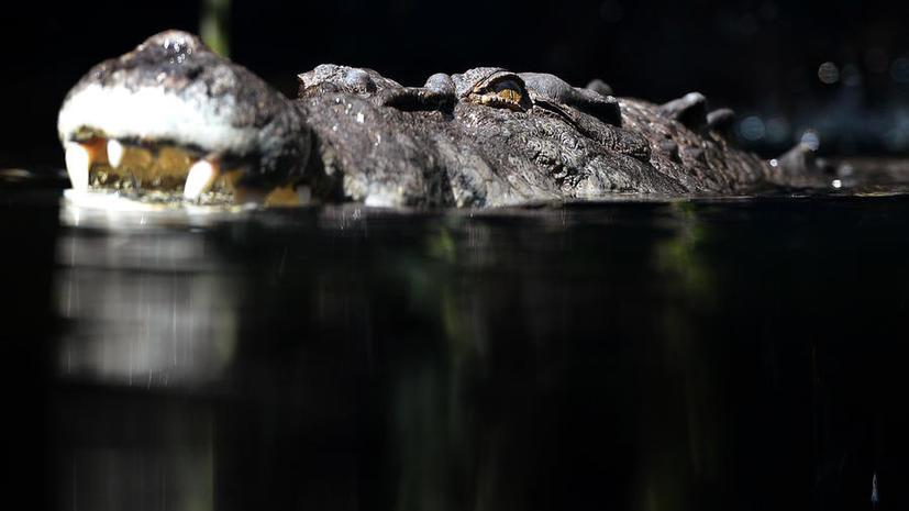 В Австралии ограбили парк рептилий