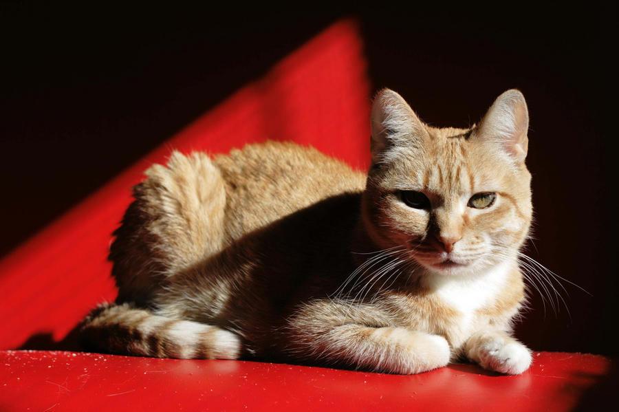 Вьетнамская преступная группировка продала на мясо 4 тыс. кошек, а выручку пустила на онлайн игры