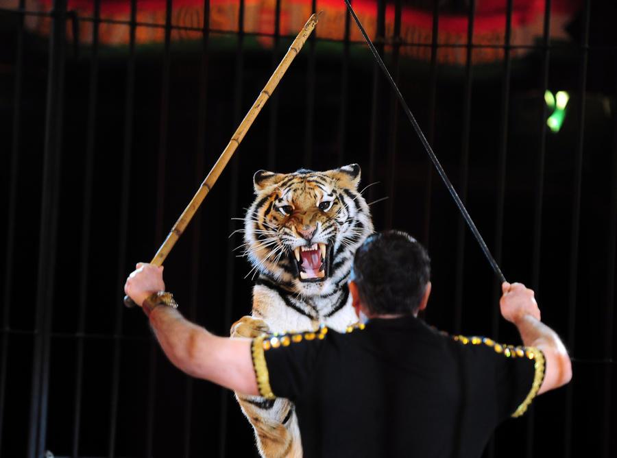 В Великобритании запретят диких  животных в цирках