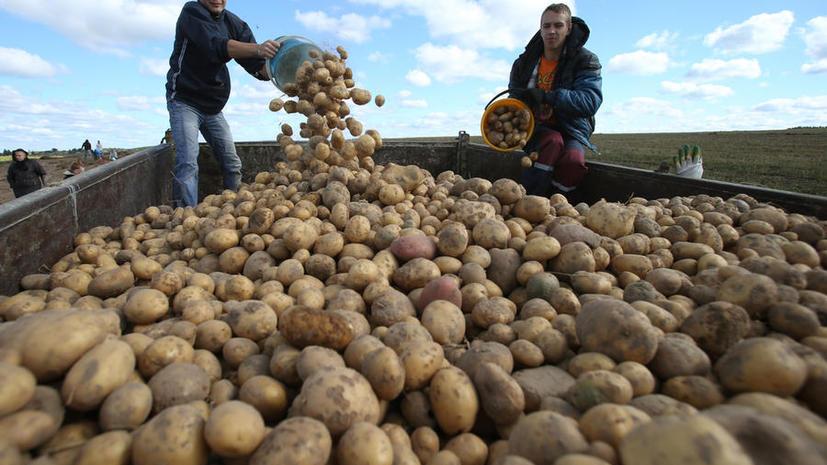 Генпрокуратура проверит торговые сети, которые продают запрещённый картофель из ЕС