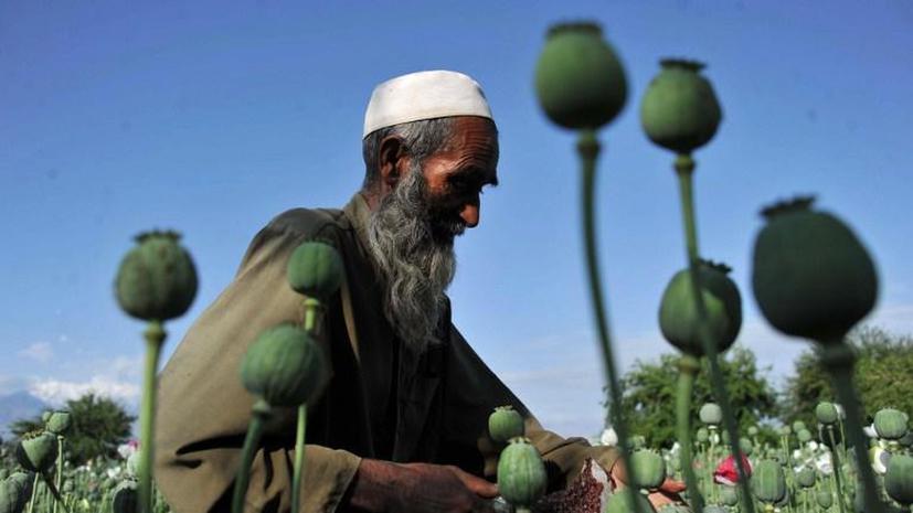 Производство опиума в Афганистане достигло рекордных объёмов