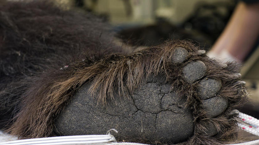Самый старый медведь мира умер в Греции