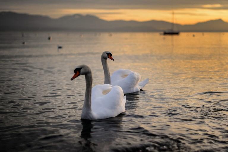 Учёные: Швейцарским озёрам угрожают цунами