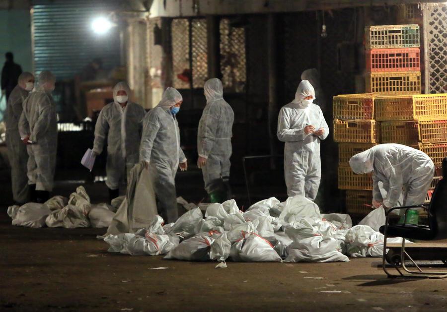 В Китае вирус H7N9 унес жизни шести человек, власти Шанхая проводят массовый забой птицы