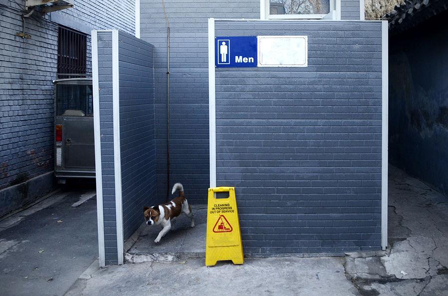 Общественные туалеты для собак появятся на улицах китайских городов