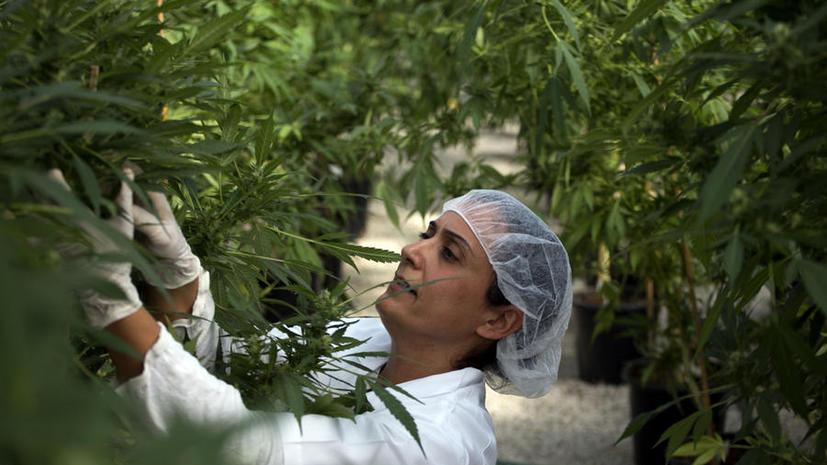 Аптеки Чехии начали продажу медицинской марихуаны