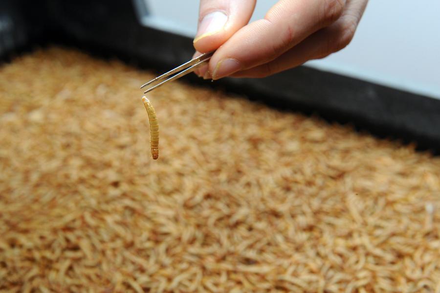 Участники космической программы Китая в ходе эксперимента 3 месяца питались червями