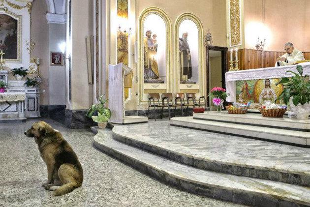 В Италии собака каждый день ждет свою умершую хозяйку в церкви