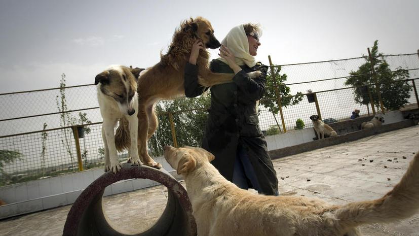 Полиция Тегерана объявила войну собакам