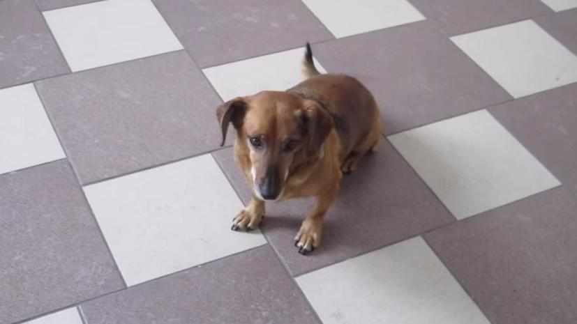 Сибирский Хатико: Собака нашла новый дом в больнице, откуда не дождалась хозяина