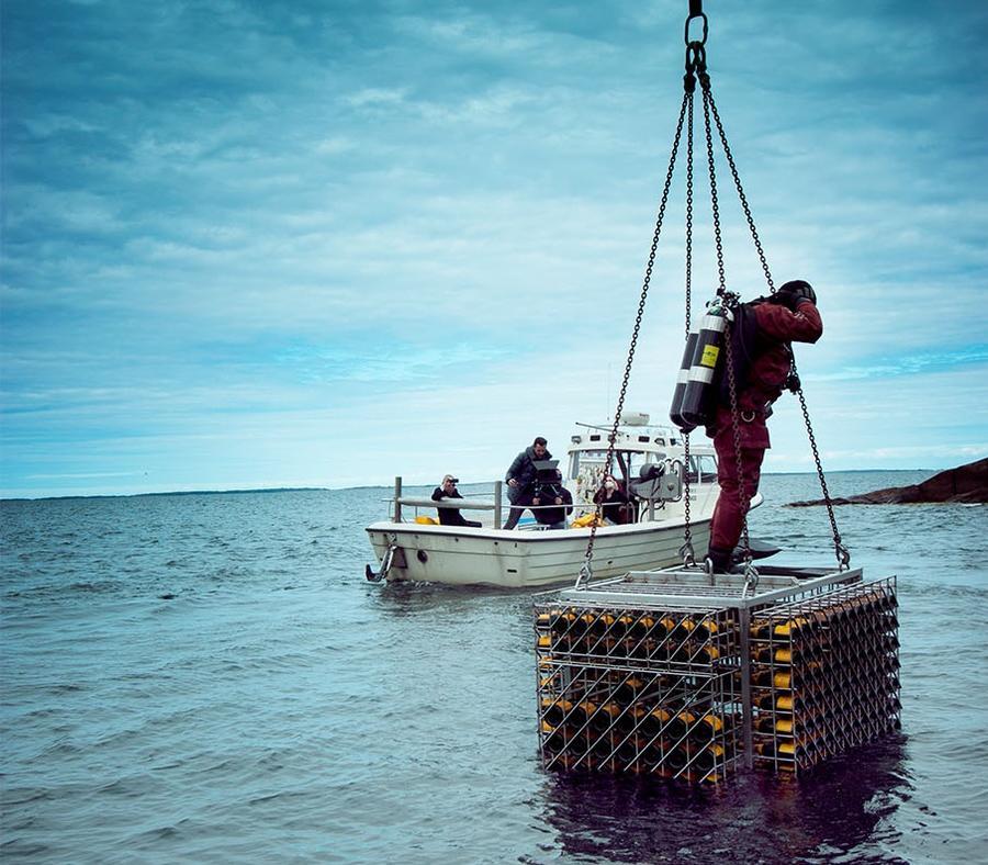 Бутылки со дна Балтийского моря раскрыли секреты шампанского 19 века