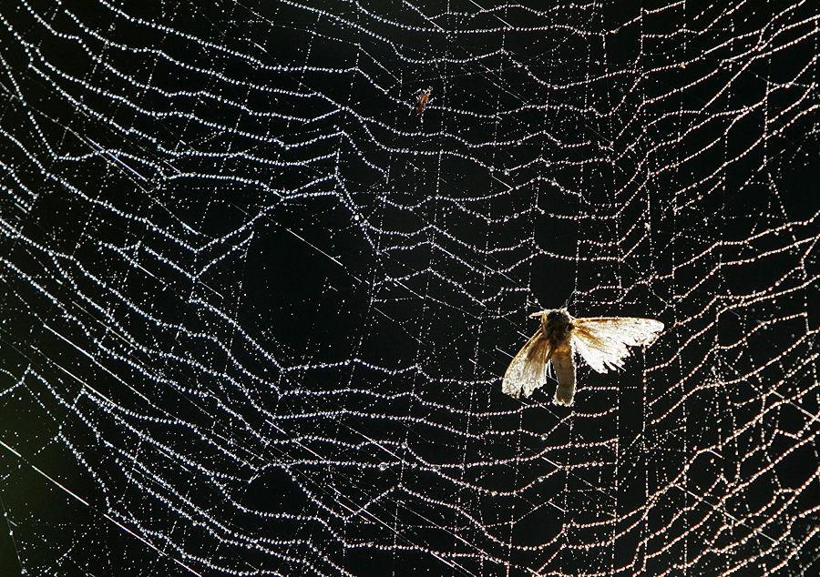Британские бабочки мрут как мухи