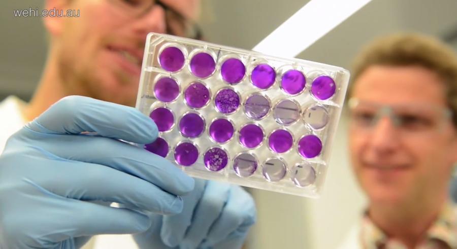 По анализу крови определить гепатит с