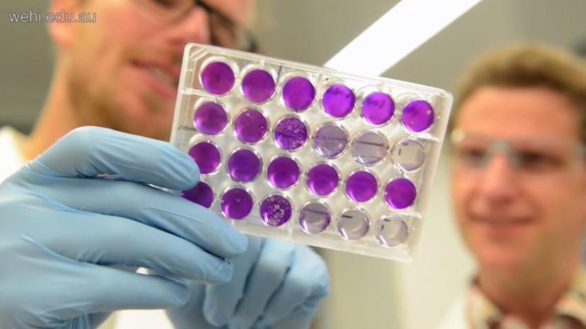 Новое лекарство показало 100-процентную эффективность в лечении гепатита B