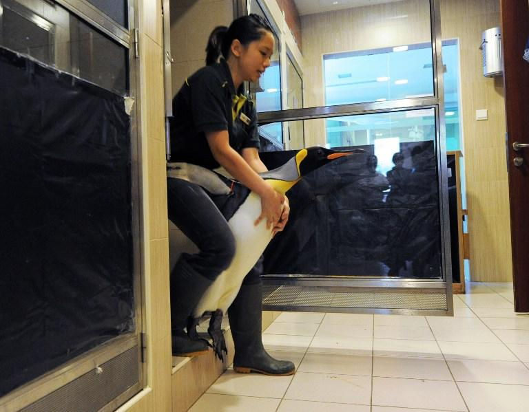 В Новой Зеландии могут запретить эксперименты над животными