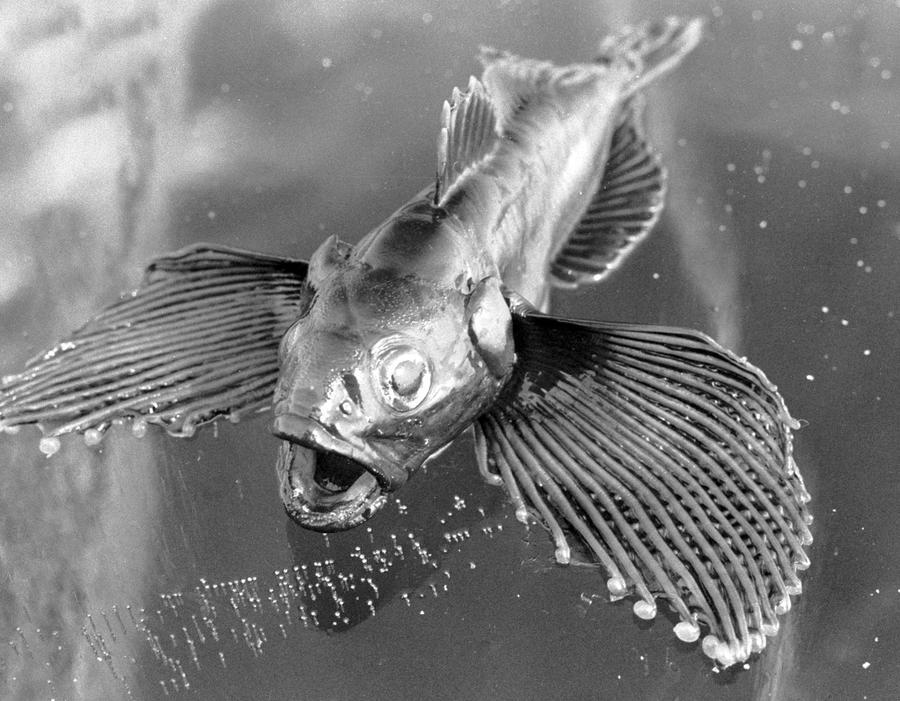 Российские учёные готовы создать рыбу-робота для военных целей