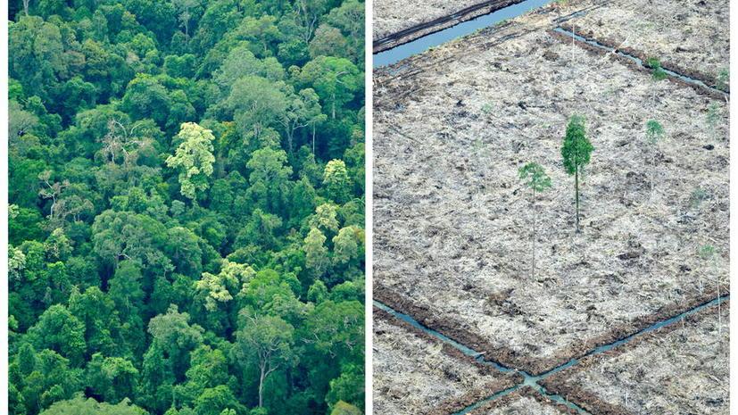 Старые мобильные телефоны защитят тропические леса Индонезии