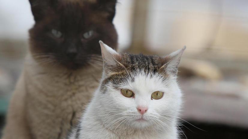 Власти Австралии намерены истребить 2 млн бродячих кошек