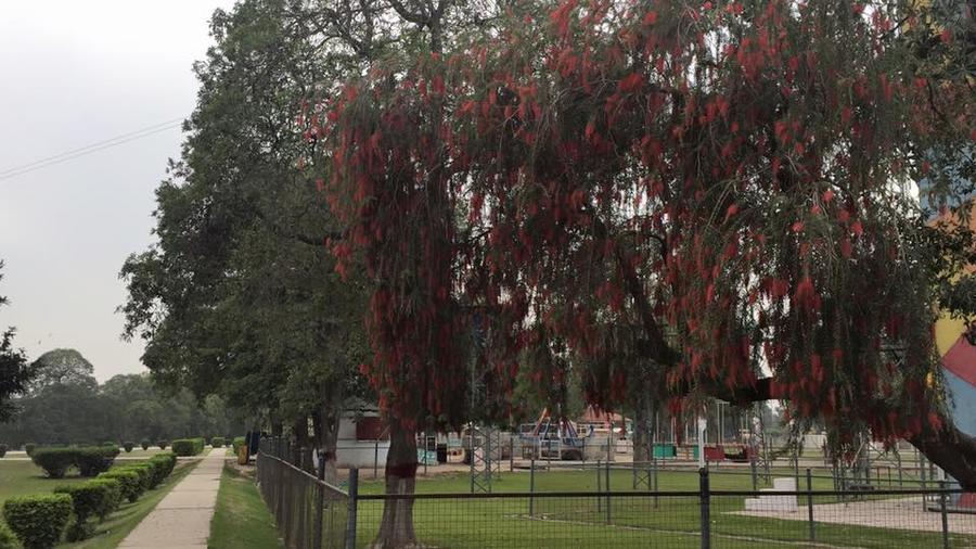 Более 60 человек погибли в результате теракта в парке пакистанского Лахора