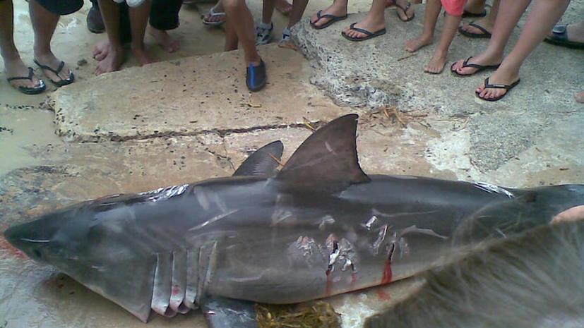 Австралиец оштрафован на $18 тыс. за убийство белой акулы