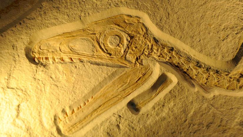Новый вид динозавра обнаружен на Мадагаскаре