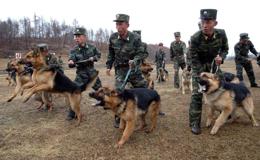 Северная Корея намекнула дипломатам о возможности удара по Южной Корее