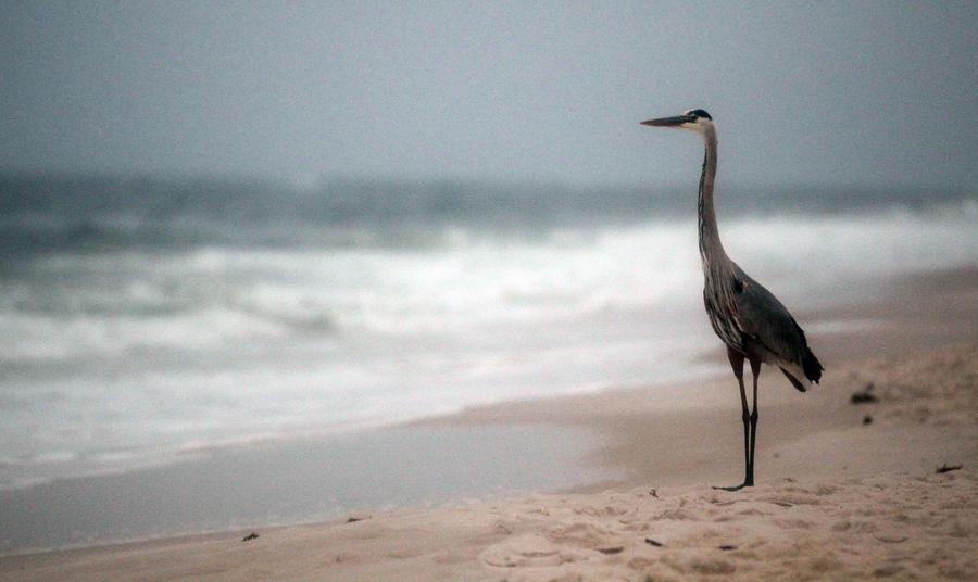 BP выиграла одну из судебных тяжб по делу о разливе нефти в Мексиканском заливе