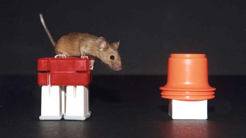 В рядах российских спецслужб появятся мыши