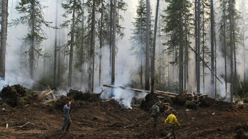 Лесные пожары охватили регионы: сильная жара вызвала уже более 100 возгораний