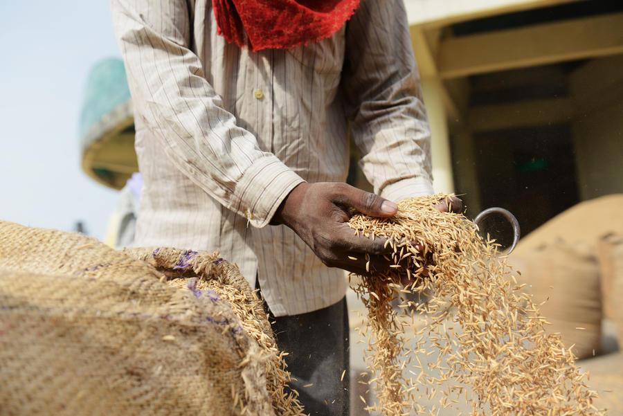 Власти Индии начали регулярную раздачу зерна, чтобы победить голод