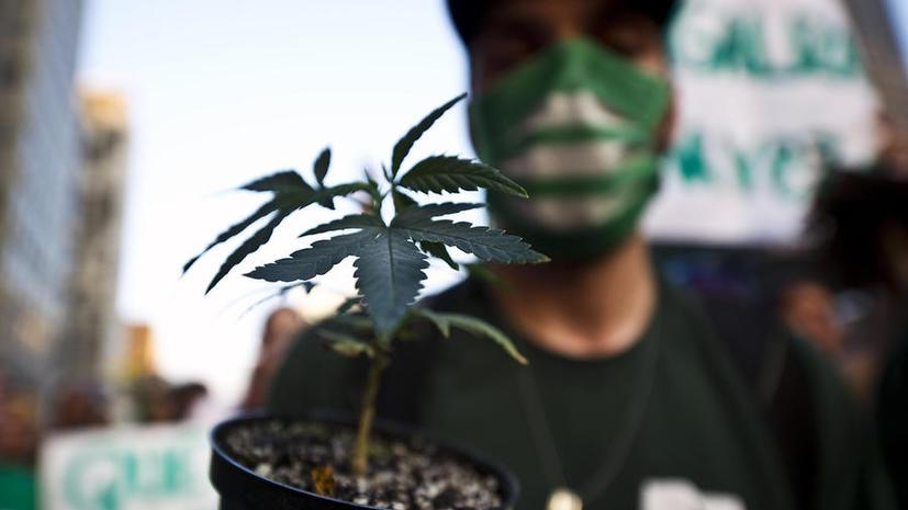Исследование: легализация марихуаны принесёт Великобритании дополнительные £1.25 млрд в год