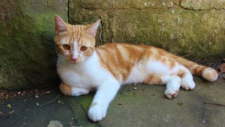 Из «нищих» в «принцы»: в поместье Черчилля поселился новый кот Джок VI
