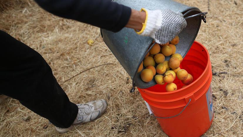 Учёные: пять порций фруктов в день защитят от рака
