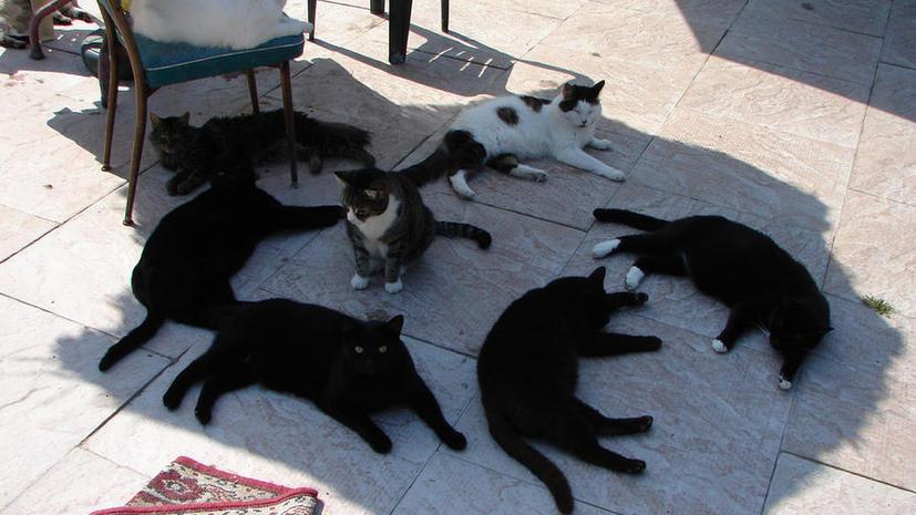 «Специалист по кошачьему видео» - новая вакансия в британском пиар-агентстве