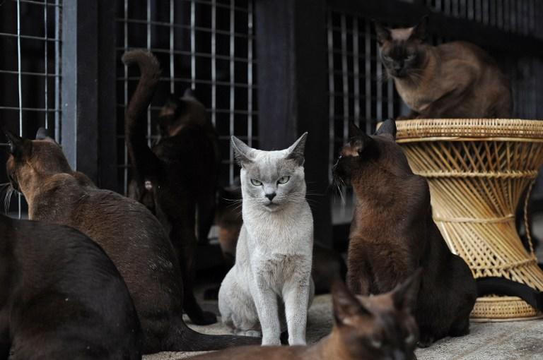 Туристов во Франции предупреждают об опасности нападения диких кошек